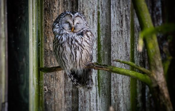 Picture birds, owl, branch, bokeh