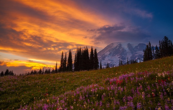 Picture forest, light, flowers, mountains, mountain