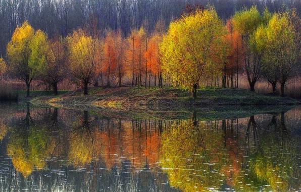 Picture reflection, trees, nature, pond, paint, Autumn