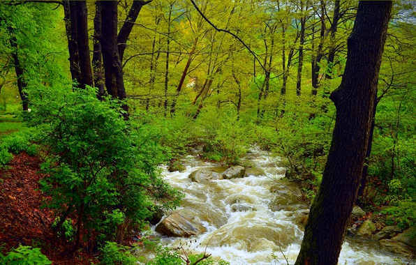 Picture Greens, Nature, Stream, Spring, Trees, River, Forest, Stones, Nature, Spring, River, Forest, Trees, Flow