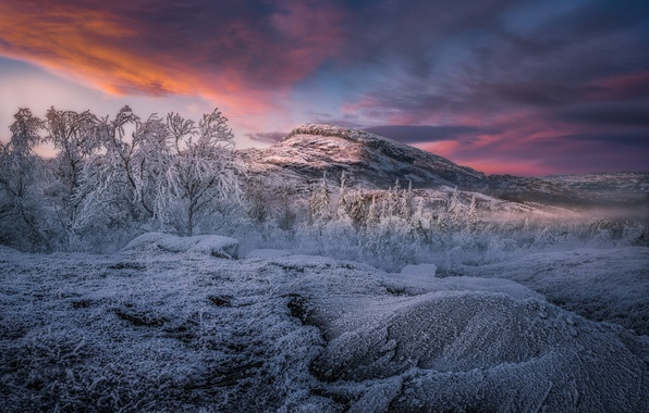 Picture winter, frost, forest, the sky, trees, mountains, nature