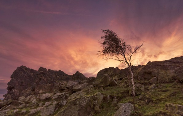 Picture stones, tree, rocks, England, glow, Leicestershire