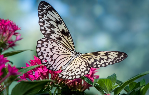 Picture flowers, butterfly, wings, insect