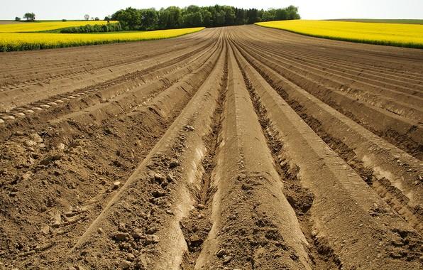 Picture summer, earth, rape, arable land