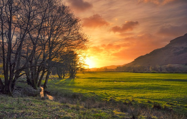 Picture field, trees, sunset, stream, England, glow, Cumbria