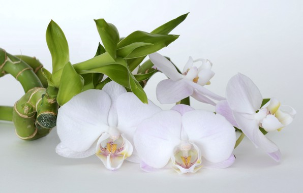 Picture flowers, bamboo, orchids