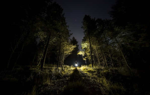 Picture forest, light, night, people