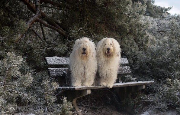 Photo wallpaper winter, dogs, bench