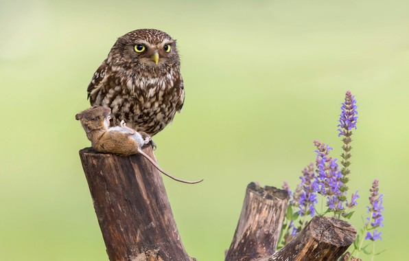 Picture flowers, owl, bird, stump, mouse, mining, birds of the world