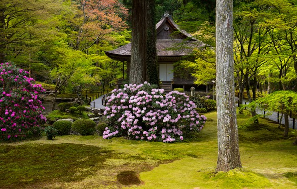 Picture greens, grass, trees, flowers, Park, stones, lawn, Japan, pagoda, Kyoto, the bushes, rhododendrons