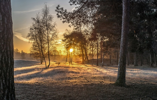 Picture forest, light, fog