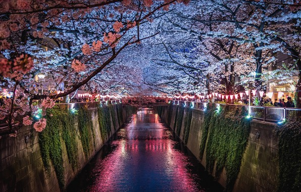 Photo wallpaper light, flowers, night, the city, lights, people, spring, Japan, Sakura, channel