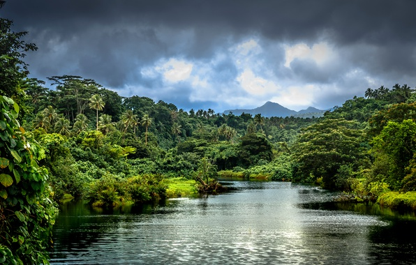 Picture greens, forest, clouds, trees, mountains, tropics, river, palm trees, jungle, the bushes, Samoa