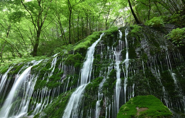 Picture forest, water, nature, stones, vegetation, waterfall, moss