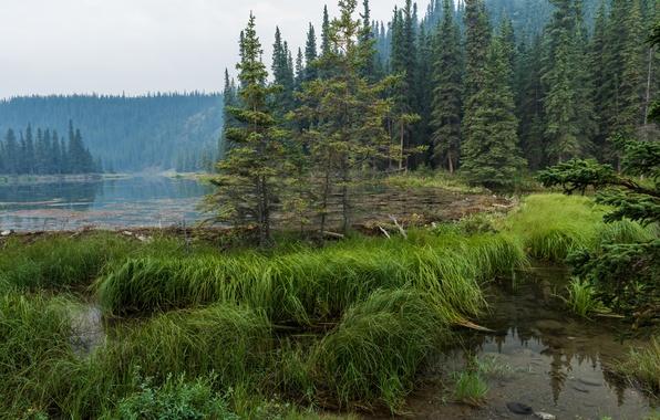 Picture forest, grass, water, trees, lake, Alaska, haze, Denali National Park, Horseshoe Lake