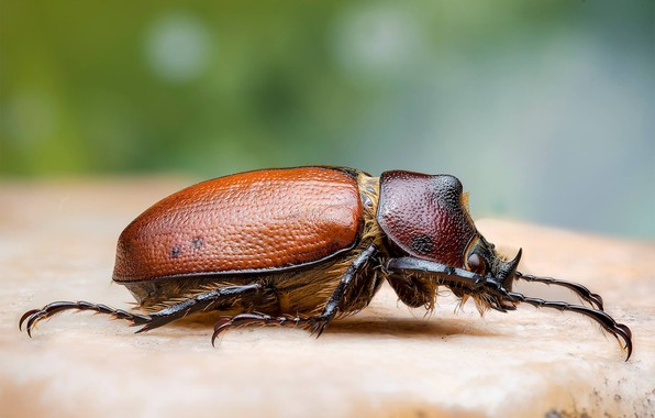 Picture macro, beetle, insect