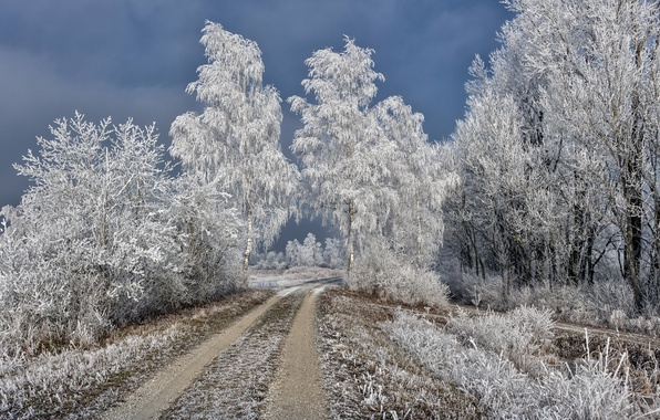Picture winter, frost, road, birch