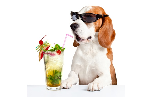 Photo wallpaper tube, glass, humor, white background, cocktail, face, drink, Basset hound, paws, table, glasses