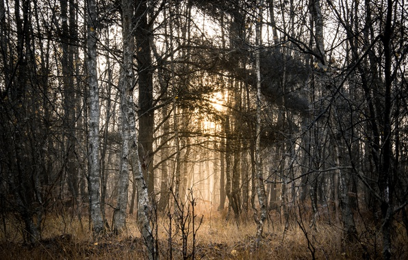 Picture autumn, forest, light