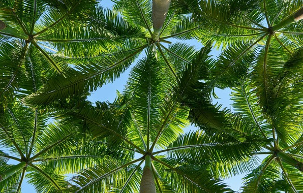 Picture leaves, tropics, palm trees