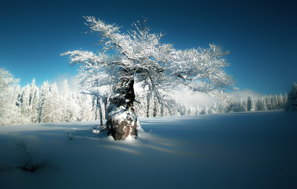 Picture winter, forest, snow, tree, Germany, Bayern, Germany, Bavaria, Deer Creek, Hersbach