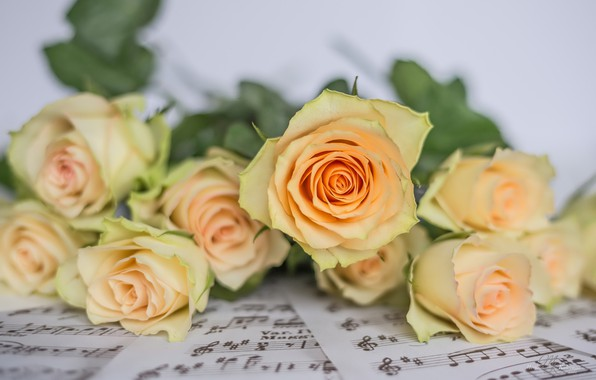 Picture flowers, notes, roses, buds