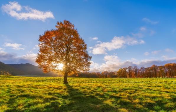 Picture field, autumn, tree