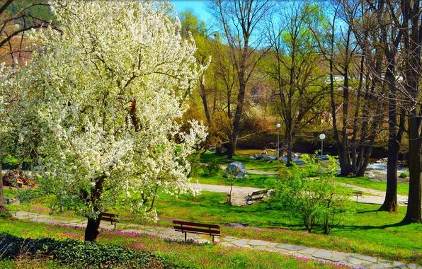 Wallpaper park flowering park spring nature bench - Nature ka wallpaper ...
