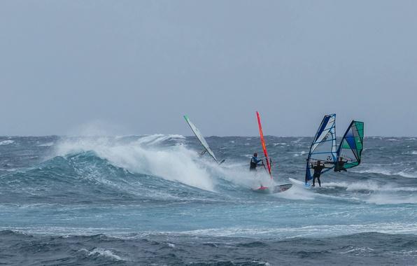 Picture sea, wave, the wind, sail, Board, regatta, Windsurfing