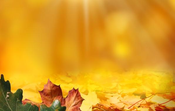 Picture autumn, leaves, light, acorns