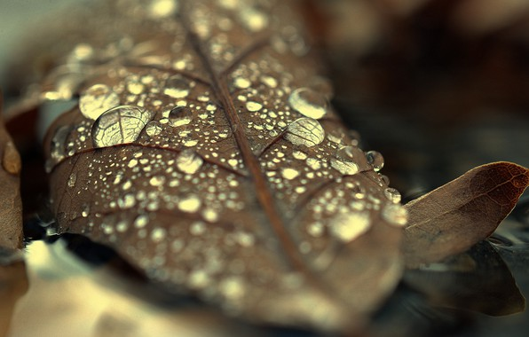 Picture Water, Autumn, Forest, Drop, Sheet