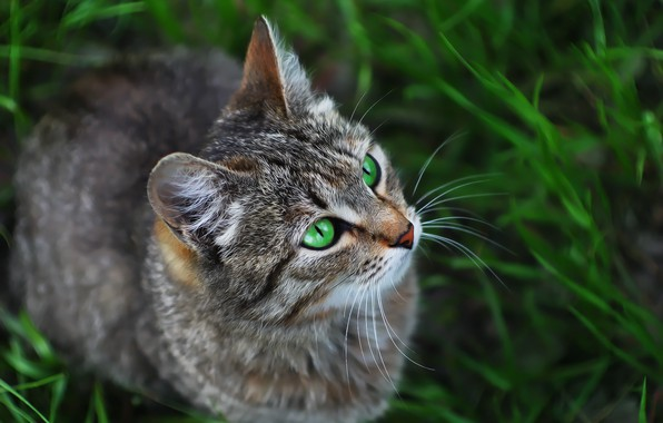 Picture cat, look, weed, cat