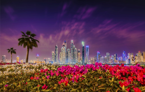 Picture sunset, flowers, palm trees, building, Dubai, night city, Dubai, skyscrapers, the bushes, UAE, UAE, Dubai …