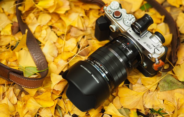 Picture autumn, leaves, the camera, strap, Olympus