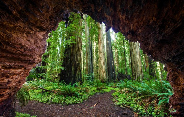 Picture CA, USA, Sequoia national Park, Giant forest