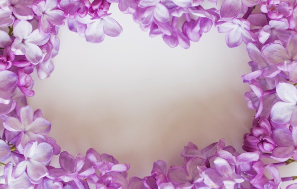 Picture flowers, white background, lilac