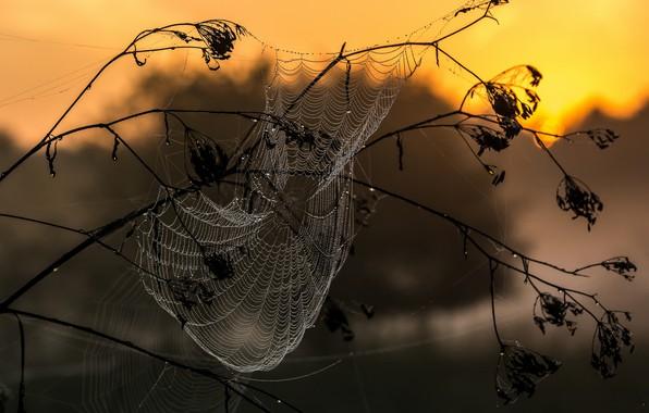 Picture macro, Rosa, web, morning