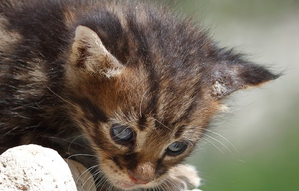 Picture baby, muzzle, kitty