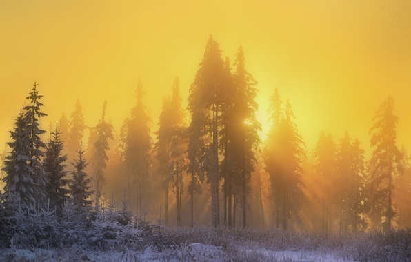 Picture winter, forest, the sun, rays, light, snow, nature, morning, haze