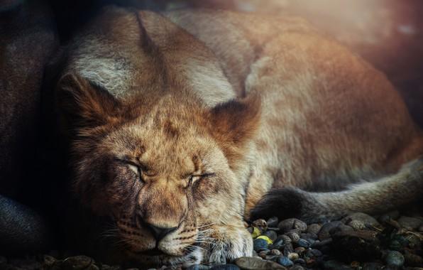 Picture cat, Leo, beast