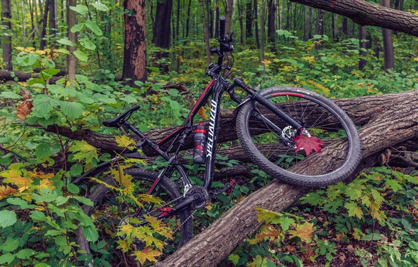 Picture autumn, forest, leaves, bike, sport, sport, bike, forest, bicycle, bike, cycle, autumn, leaves, Cycling, specialized, …