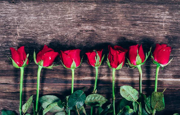 Picture flowers, roses, red, red, buds, wood, flowers, romantic, roses, bud