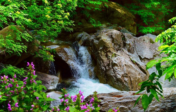Picture Flowers, Waterfall, Stones, Nature, Flowers, Waterfall
