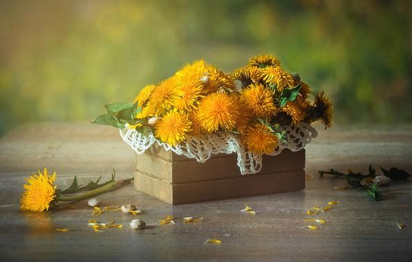Picture background, petals, box, dandelions