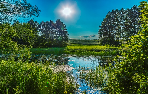 Picture greens, summer, the sky, grass, the sun, trees, pond, the reeds, Ukraine, Poltava
