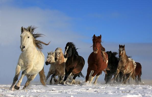 Photo Wallpaper Nature Sky Running Wildlife Wild Horses Animals