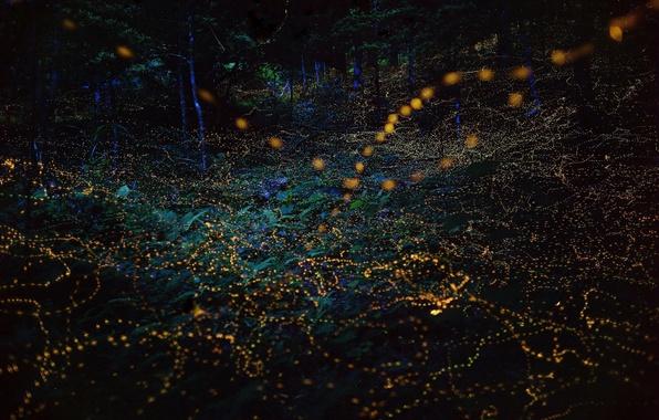 Picture light, night, nature, lights, fireflies, the evening, bokeh