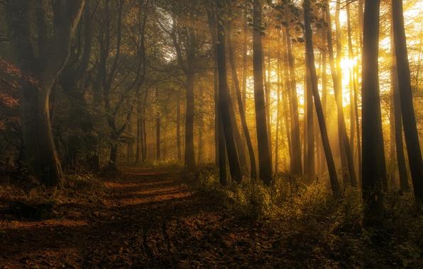 Picture forest, Scotland, haze