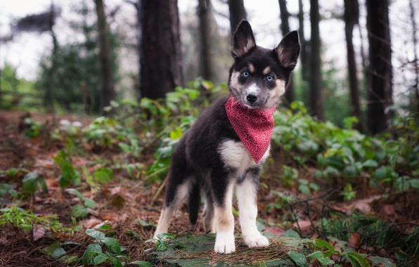 Picture dog, puppy, shawl
