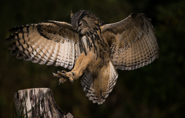 Picture flight, nature, owl, wings, color